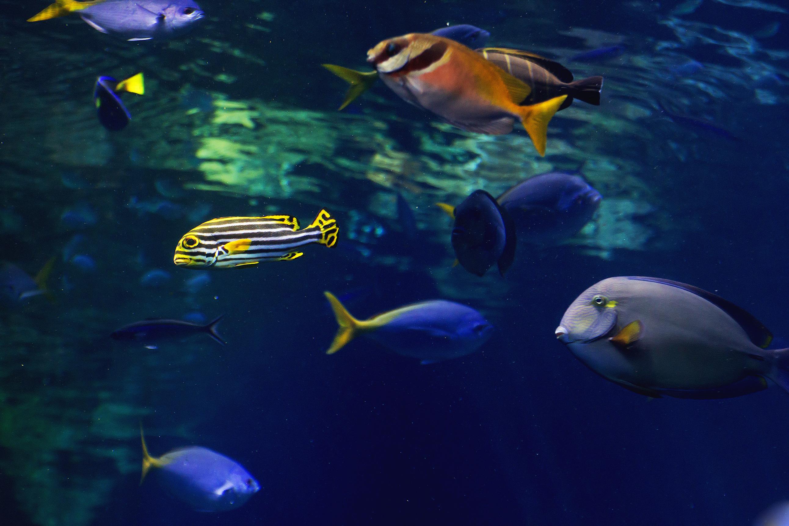 Fish for unfiltered tank - Fish For Unfiltered Tank